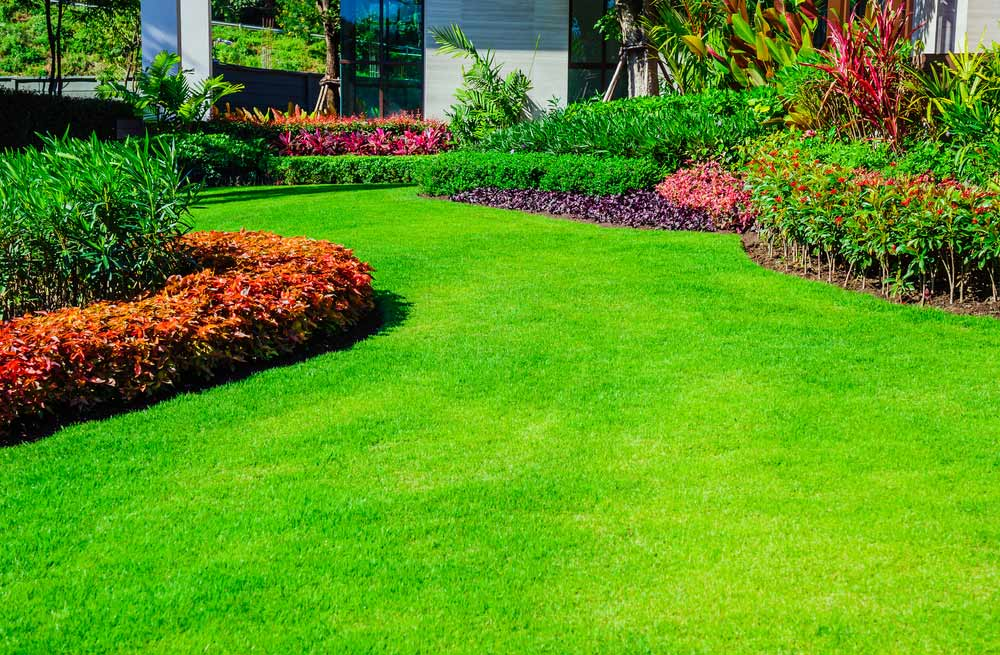 lawn fertilization services New Bern NC lawn fertilizing company lawn fertilizer